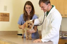 Clinica Veterinara